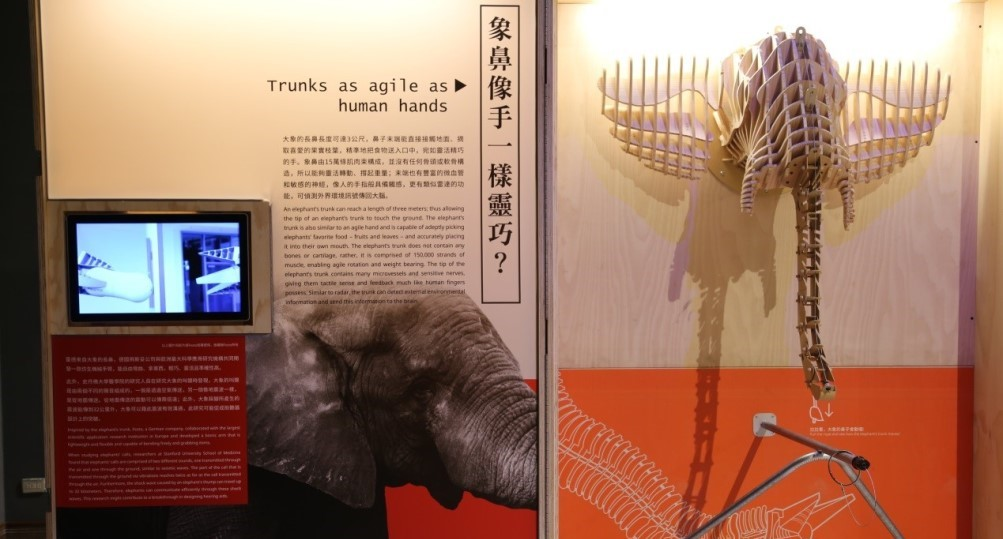 展覽介紹-向大象和老鼠學靈巧Learning How to be Agile from Elephants and Mice
